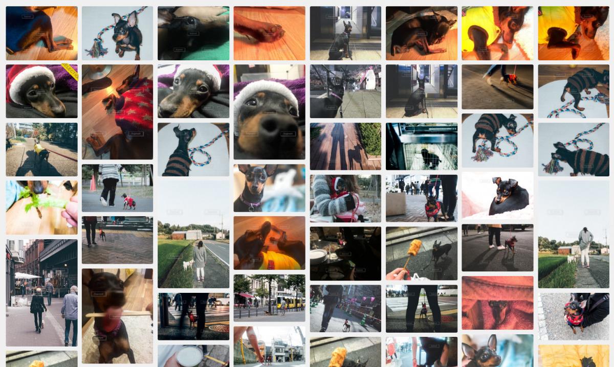 スナップマート(Snapmart)に犬写真追加。部屋でくつろぐミニチュアピンシャー