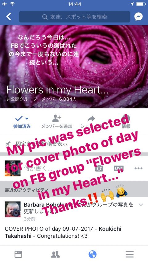"雨のラナンキュラスの写真がFACBOOKグループ「Flowers in my heart…」でカバーイメージに選ばれました!My pic was selected for cover image of Facebook group ""Flowers in my heart…"""