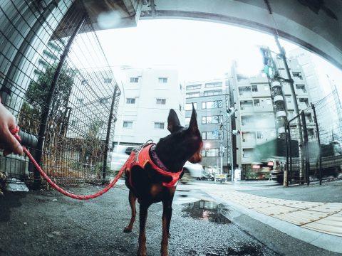 スナップマートで雨の日の犬の散歩写真が編集部セレクションに選ばれました!