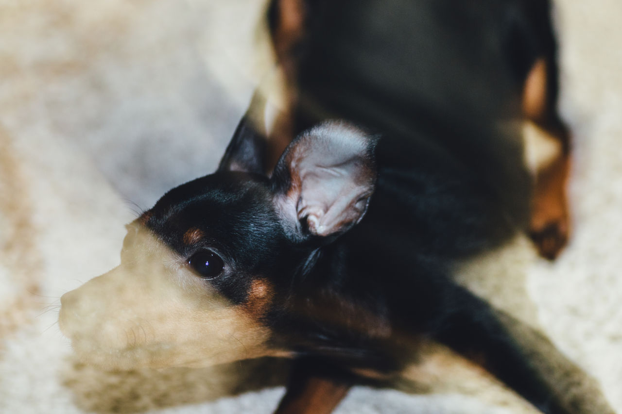 My Collection of Exceptional Dog Portrait on EyeEm