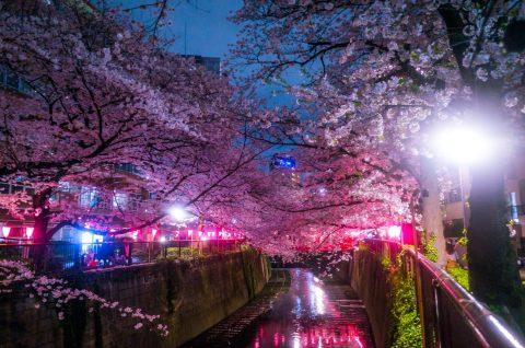 本日最終日!賞品:Fujifilm Instax Mini 90 Camera 海外フォトコンテストSNS:viewbug 「The Pink Color Photo Contest」