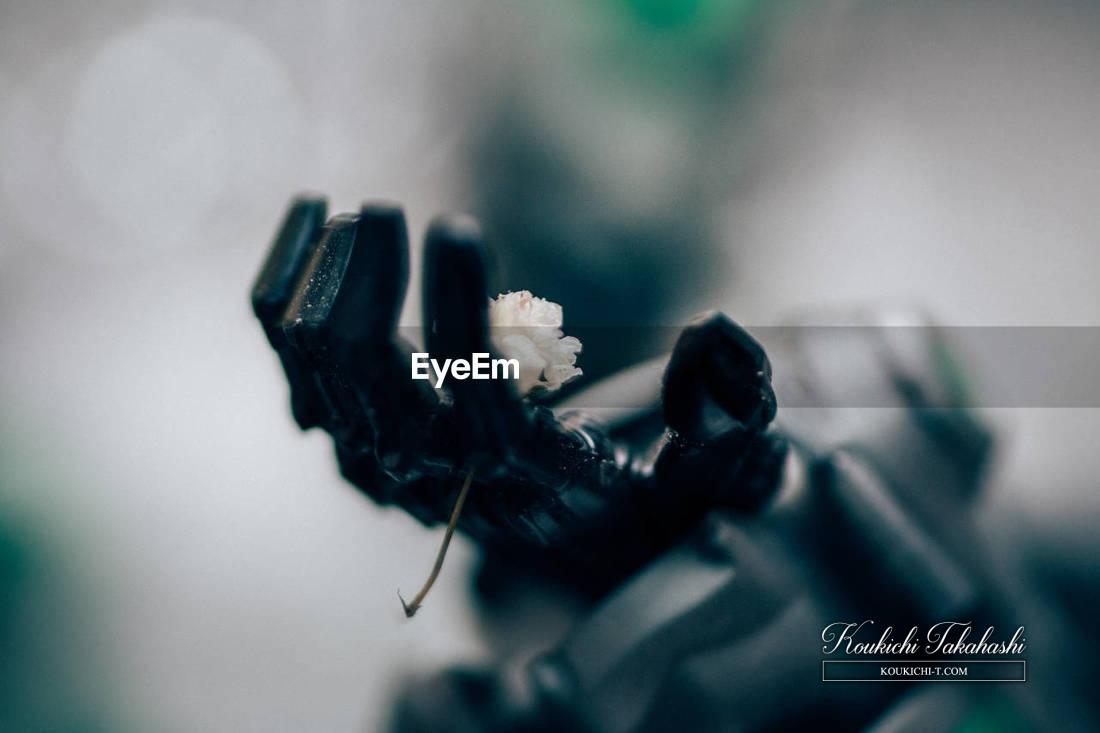EyeEm Marketで写真1枚168ドルで売れました!フルライセンスでのご購入ありがとうございます!EyeEm販売履歴売上