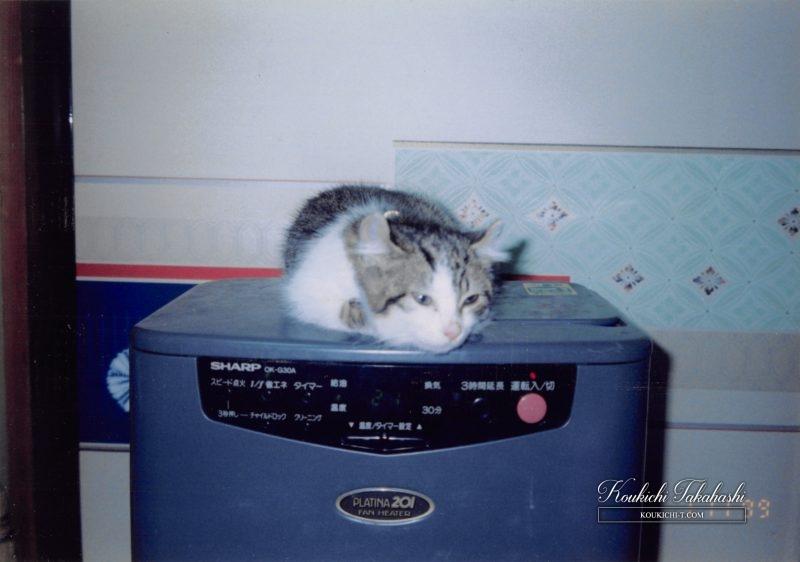 ファンヒーターの上で眠る子猫。写ルンです。フィルムカメラ作例