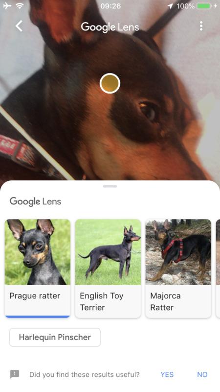 グーグルレンズがiOS Googleアプリで使用可能に!モノやテキストをデータ化、関連情報表示。Googleレンズ/アプリ最新情報2018
