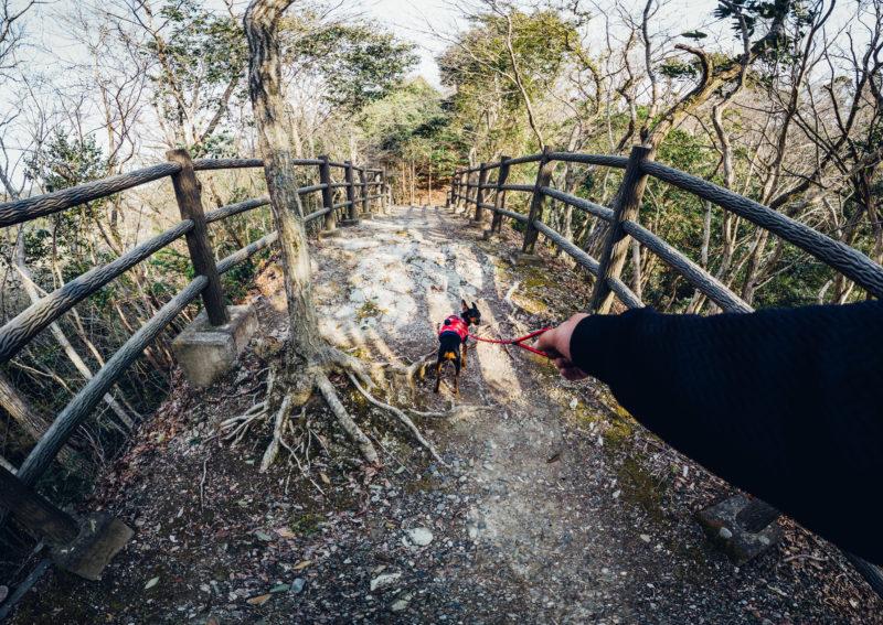 Osmo Pocket実写レビュー。パノラマ3×3モードで写真を色んな場所で撮影してみた。渋谷、秋葉原、浅草、海。画質チェック用などにどうぞ。DJI Osmo Pocket静止画レビュー/使用感 2019