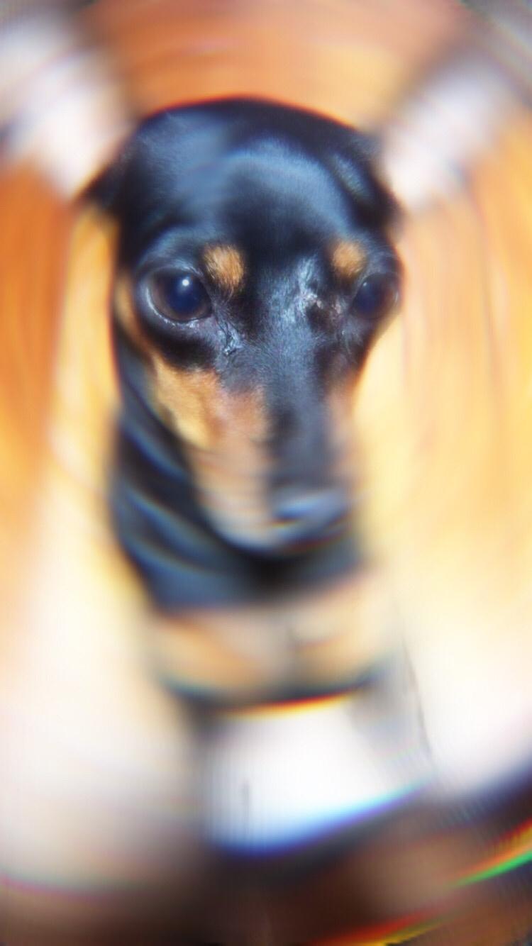 インスタストーリーズカメラ ポートレートモード(フォーカス)の新フィルターぼかし効果試してみた。すごいボケるw-2