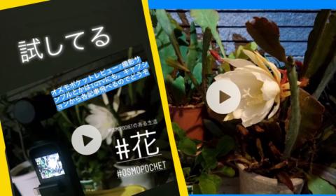 Osmo Pocketタイムラプスで花が開くとこ撮影したけど失敗した動画有り。Premiere Rushで補正。