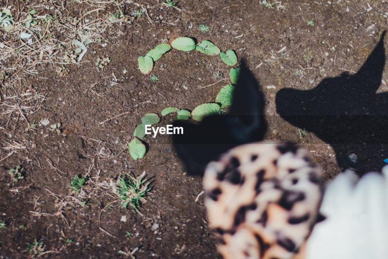 (日本語) 犬と葉っぱで作ったはてなマーク。疑問、Q&Aイメージ写真素材ストックフォトEyeEm