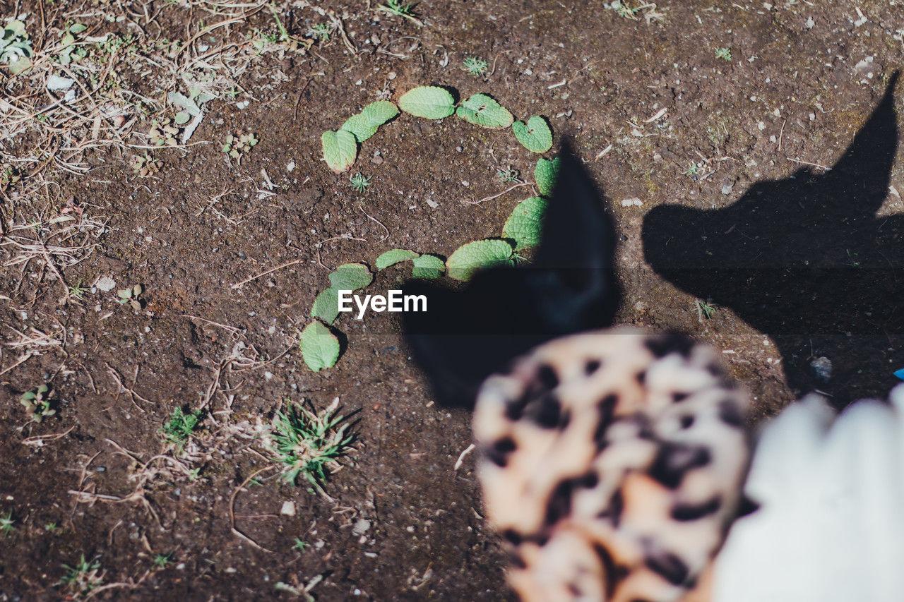 犬と葉っぱで作ったはてなマーク。疑問、Q&Aイメージ写真素材ストックフォトEyeEm